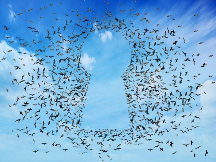 Birds in teh sky making shape of a keyhole